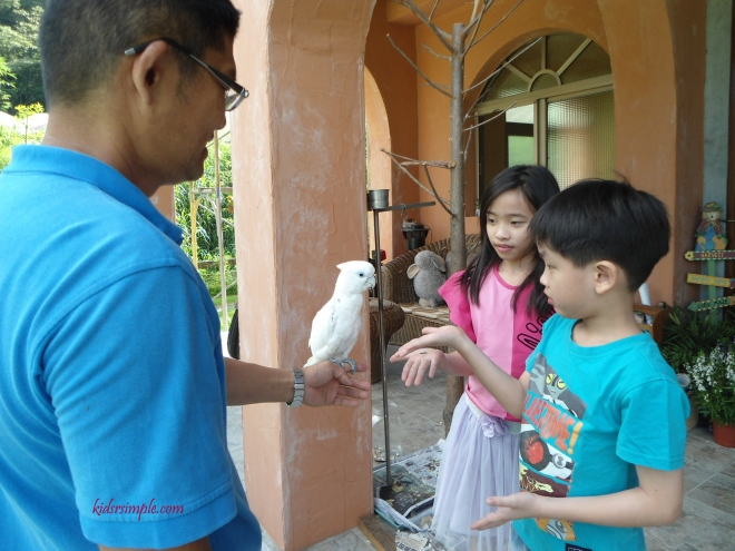 Mr Xie's lovely parrot. XX and YH love the parrot so much that it is the first thing they want to see each morning and say goodnight at night