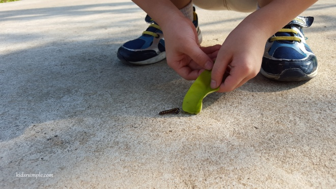 Catching milipede
