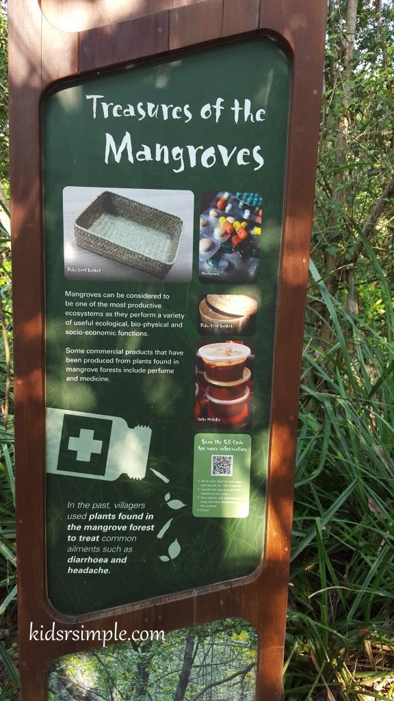 Treasures of the mangroves