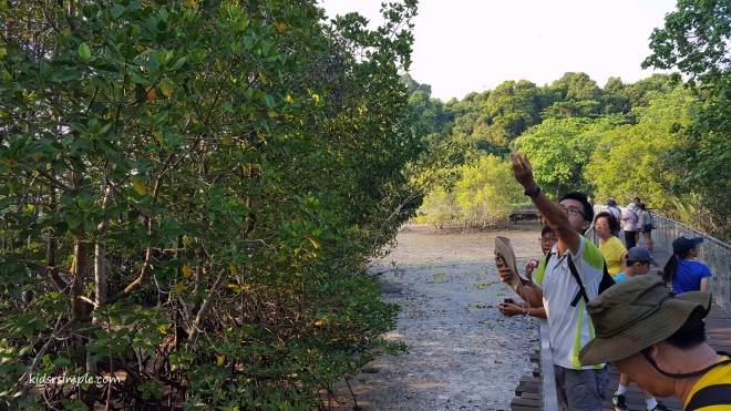 Our tour guide telling stories on Mangrove Trees
